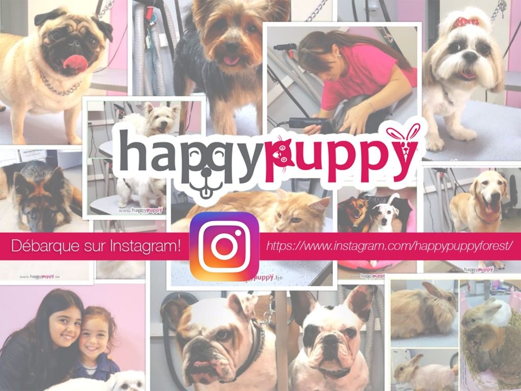 HappyPuppy Bruxelles Instagram